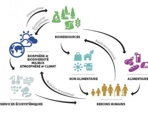 Tirez partie de la bioéconomie !